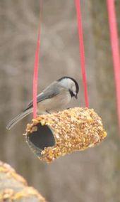 Oiseau qui vient manger sur le rouleau de papier toilette
