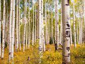 In der San Juan Range der Colorado Rocky Mountains 2 – ID # 154015595