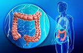 Lernen Sie den Fat Destroyer kennen – entgiftet und beseitigt Blähungen in kurzer Zeit