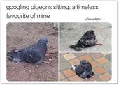 47 Meme von lustigen Tieren 12 15