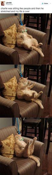 Willst du mehr lustige Katzenfotos? Klicken Sie auf das Foto, um mehr #funnycats #catloversco… – Diy Baby Ideen
