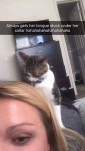Wenn du eine Katze bist und der Kragen deine Zunge fängt 😼👅 – Humor – #Cat #Ca …