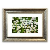 East Urban Home Framed Print A sky full of white daisies Wayfair.de