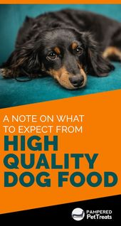People Who Have Dogs As Their Pets Always Want To Offer The Best To Them Be It Healthcare Or Dog Food People Who Dog Food Recipes High Quality Dog Food Dogs