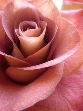 Цветы2 – Roses