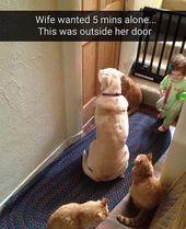 "Dog Memes on Instagram: ""Follow @littlelargedogs for more! 🐶"""