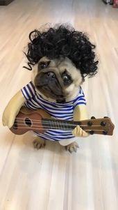 Pets' Guitarist Costume for Halloween & Christmas Cosplay