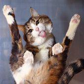 Tippen Sie zweimal auf dieses Foto, um sich Collins I-Katzenpalast anzuschließen. Eine Alleskatzengruppe o …   – For the love of Cats