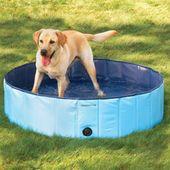 The Canine Splash Pool – Puppies Oakley autumn