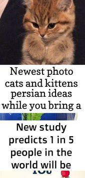 Neueste Foto Katzen und Kätzchen persischen Ideen, während Sie eine frische Katze in Ihr Haus bringen, ist es deem 2