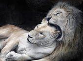 ¿Amantes? … o … simplemente hambrientos LOL😂😉😙   – LOL ;-)