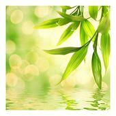 不織布の壁紙の花の広場»緑の雰囲気I«   – Products