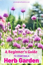 A Beginners Guide To Starting A Herb Garden