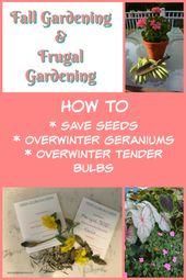 Fall Gardening & Frugal Gardening – Thinking Ahead to Next Spring  – Gardening Tips