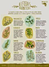 El uso de las hierbas aromáticas, sus olores, sabores y propiedades curativas d…