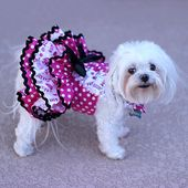 Vestido para perros para San Valentín, hecho a medida: el arnés para perros Vestido de volantes de primavera o verano presenta un estampado de lunares blanco sobre rosa fuerte   – Chow chow puppy