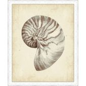 Highland Dunes 'Antique Shell Study I' Framed Painting Print