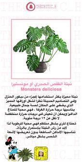Monstera القفص الصدري Trees To Plant Plants Veg Garden