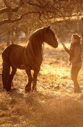 Photo of Pferdefotografie – Jengels Fotografie- Pferdehunde und Menschen- Bereich Bonn