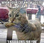 20 Bilder Funny Cat Memes zum Aufheitern an einem schlechten Tag