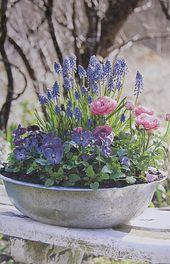 Couleur   – My garden