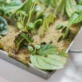 """Brent Seamons auf Instagram: """"Pflanzen sind wirklich das Geschenk, das wir immer wieder geben. Sie sorgen für Glück.   – Peace of Nature"""