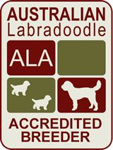 Australian Labradoodle Accredited Breeder Logo Inc Melbourne Vic Labradoodle Dogs Labradoodle Labradoodle Puppies For Sale