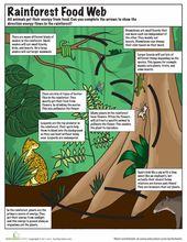 Rainforest Food Chain | Worksheet | Education.com