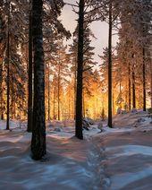Photo of Der Nachthimmel über Finnland und Island mit Sternen gesättigt Fotografiert von Mikko Lagerstedt
