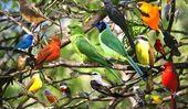 ¿Son los pájaros mamíferos?   – www.dicasecuriosidades.net