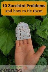 #gardening games ks2 english worksheets, vegetable container #gardening 101 plan…