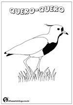 Desenhos De Aves Brasileiras Para Colorir Desenhos De Aves