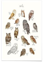 Owls als Premium Poster von Amy Hamilton | JUNIQE …