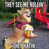 LOL Hilarious Dog Memes so true