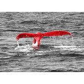 East Urban Home Glass Picture Animals Whale Tail, photo print in red