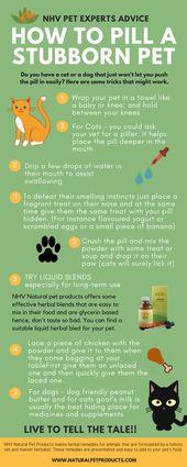 Integrative Veterinärmedizin: Wissen, was für Ihr Haustier richtig ist
