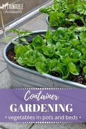 Vegetable Container Gardening for Freshmen – Attainable Sustainable