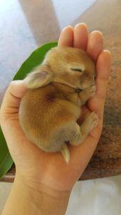 C'est un lièvre, c'est un moelleux, c'est un … #cutestbabyanimals #Un moelleux …   – Mara Shanahan