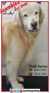 Baño, cabello y estética canina. Alimentos y suministros para mascotas. AV. Asam …   – Animales Mundo