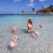 In the Caribbean, there is a beach where you can swim with flamingos