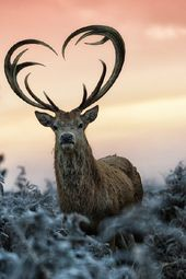 Lustige sprechende Tiere – Spaziergang auf der wilden Seite – Vorschau auf Episode Zwei – BBC One   – Forest