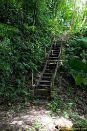 40 Pico Bonito National Park Ideas