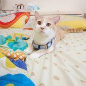 #Katzen #Kätzchen #Kätzchen #Kedi #Katze # แมว