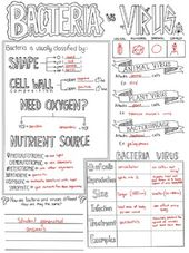 28+ Virus and bacteria worksheet answers Online