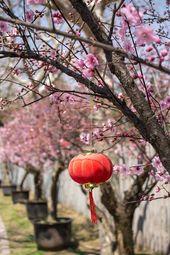 15 erstaunliche Orte, um Kirschblüten in der Welt zu sehen   – Asia Travel Bucket List