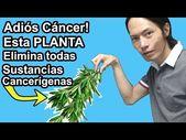 Coloca esta planta a tu comida, ESTA elimina Todas sustancias cancerígenas! – Y…