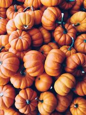 A beautiful collection of pumpkins about Pinterest user Delaney Johnston # …