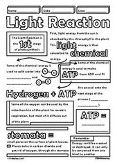 Photosynthesis Doodle Review Middle High School Biology Life Science