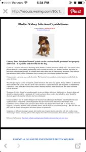 Essential Oil To Dissolve Bladder Stones In Dogs Essential Oils Dogs Essential Oils For Uti Oils For Dogs