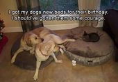 22 Funny Animal Memes And Pictures Of The Day – In memory of Marley